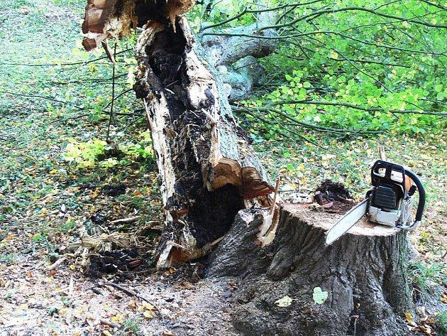 Revitalizace bažantnice v parku ve Veselí nad Moravou