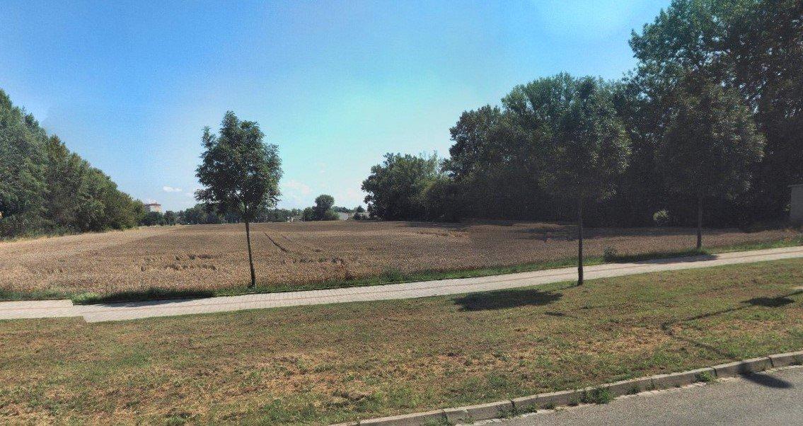 Stromy života versus půda živitelka.